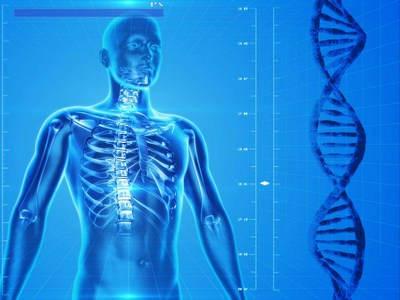 Механизм влияния активных форм кислорода (АФК) на физиологию человека